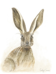 Hare - by Carolyn Towers